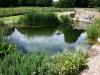 piscinas-ecologicas-5
