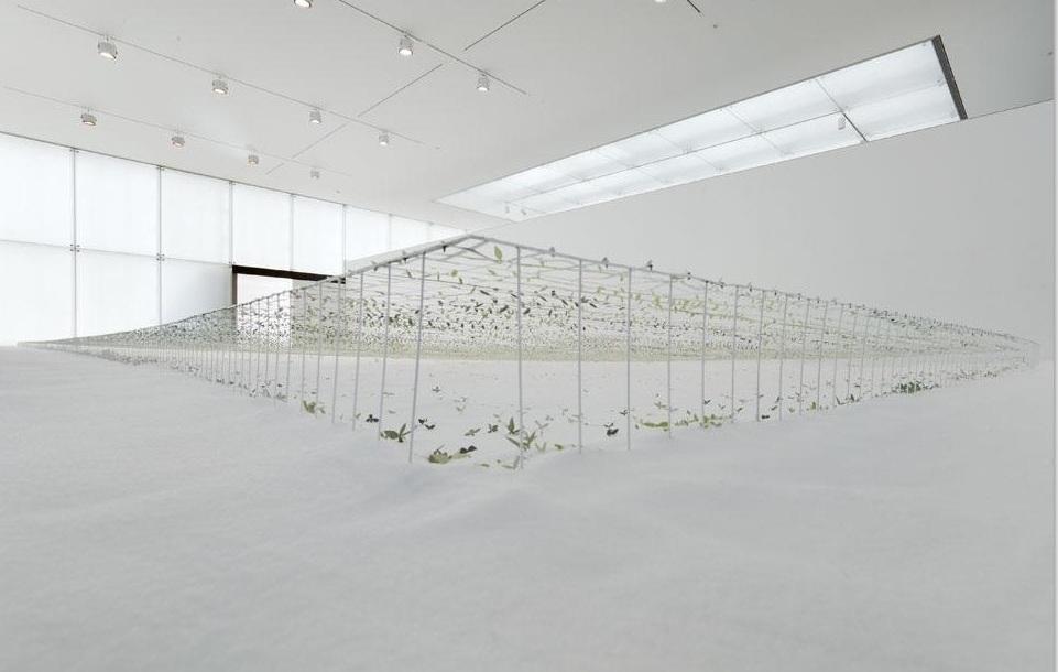 junya-ishigami-desmaterializar-arquitectura-5