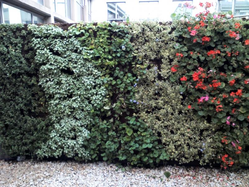 muro-vegetal